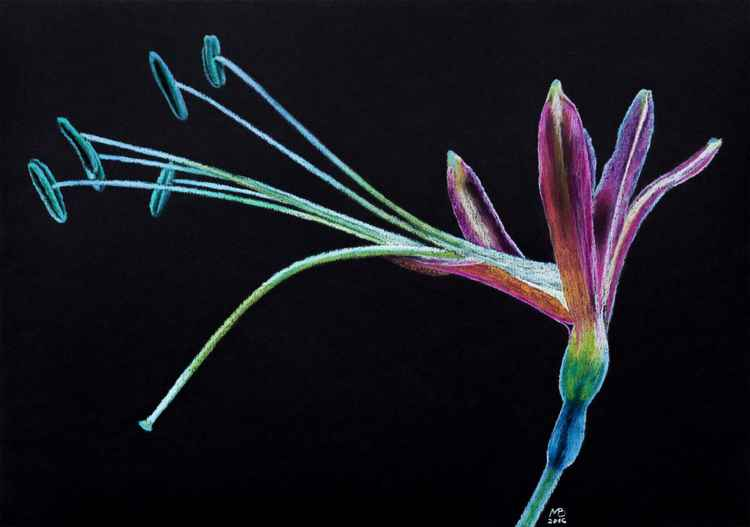 "Original pastel drawing ""Multicolor flower"" -"