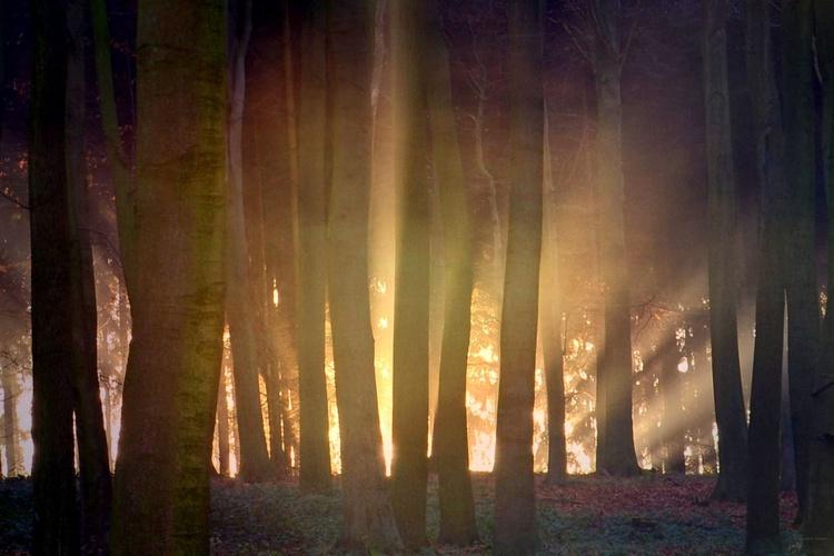 Magic of Nature - Image 0