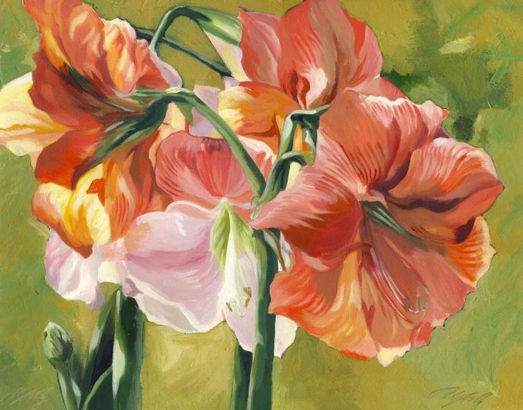 Amaryllis in spring - Image 0