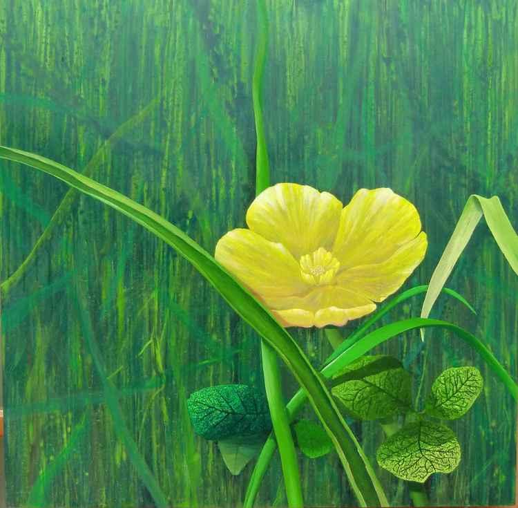 Buttermarshmarigold -