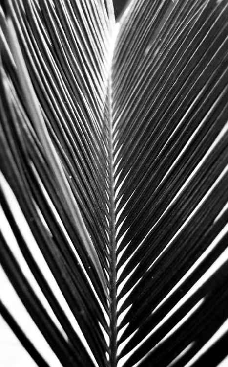 Stripes -