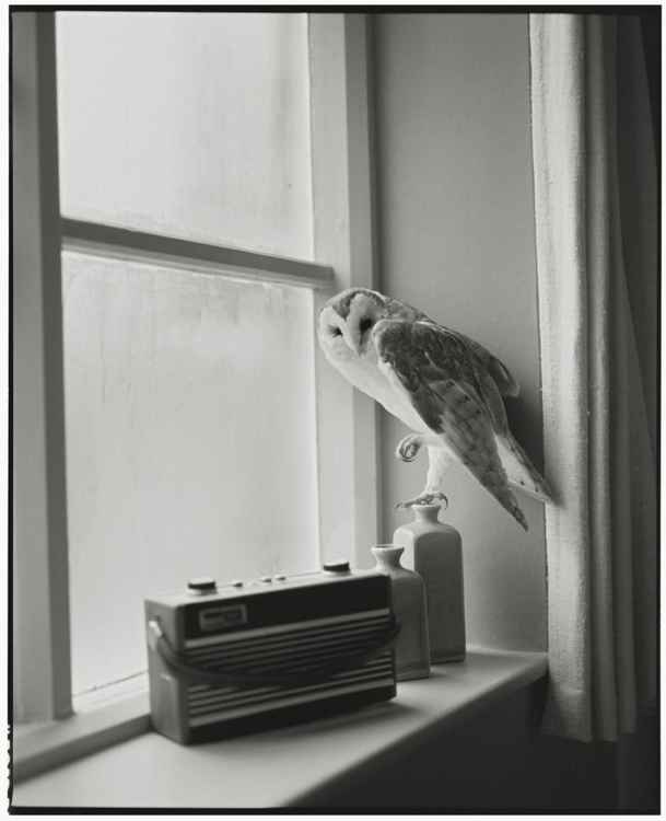 The Owl and the Radio (Small size)