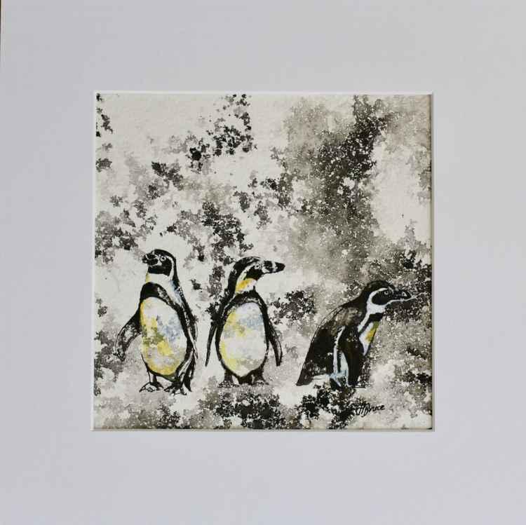 Humbolt Penguins
