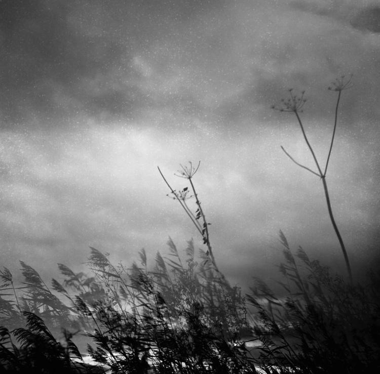 stardust - Image 0