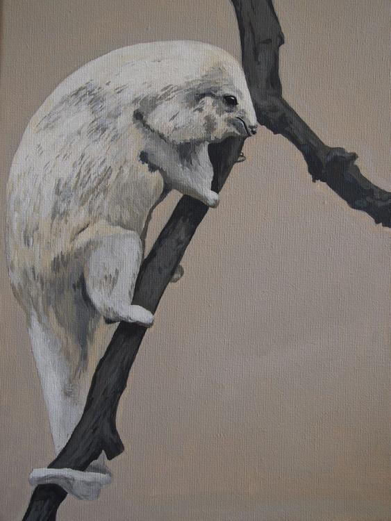 Pygmy Anteater - Image 0