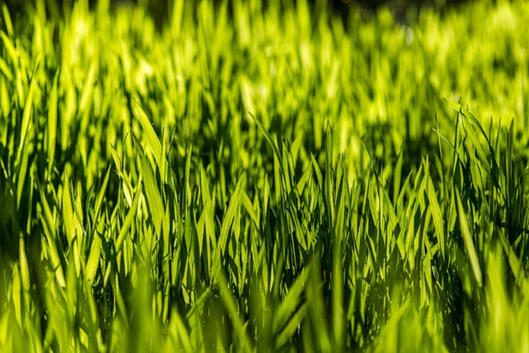 Fresh Spring Grass - Limited Edition Print - Image 0