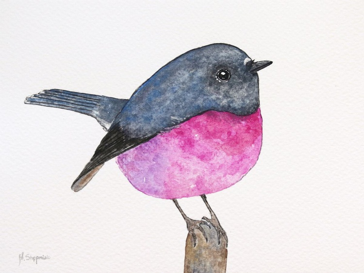 The pink robin (Petroica rodinogaster) - Image 0