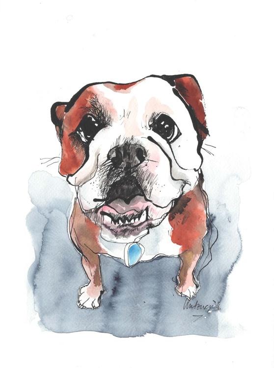 Soppy Boxer - Image 0