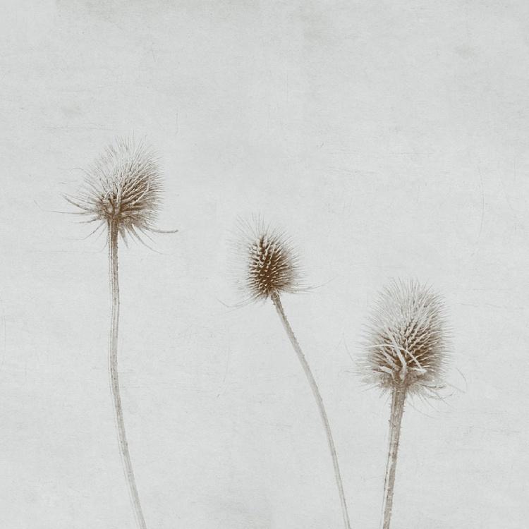 Summer breeze selenium - Image 0