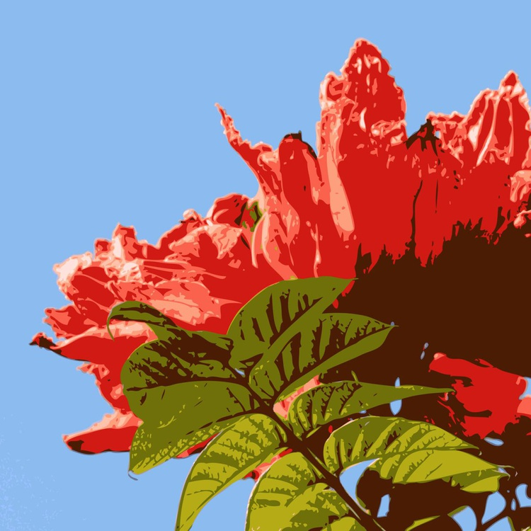 Red Hibiscus - Image 0