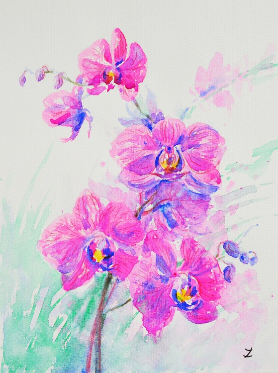 Rose-Color Orchids - Image 0