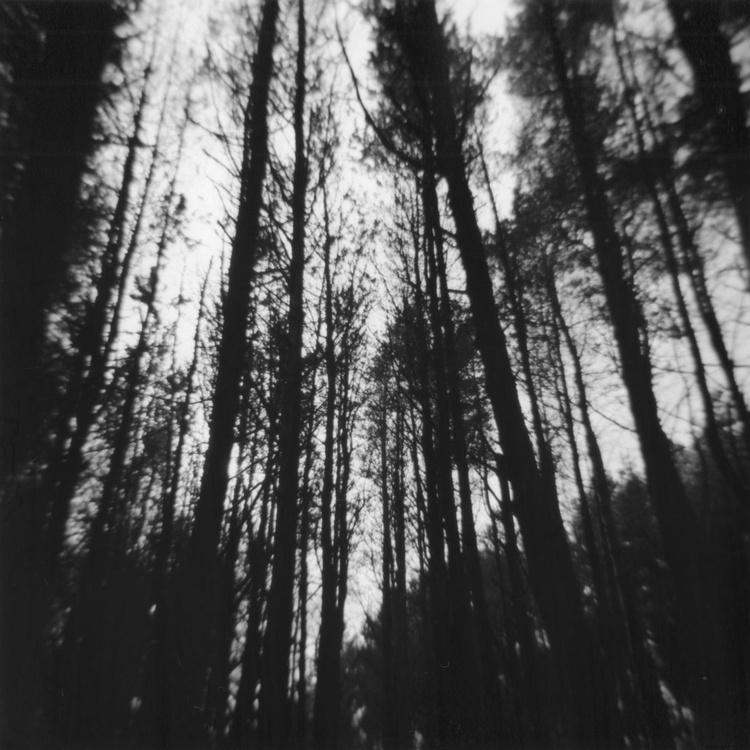 Northern Woods 2, 1/7 - Image 0