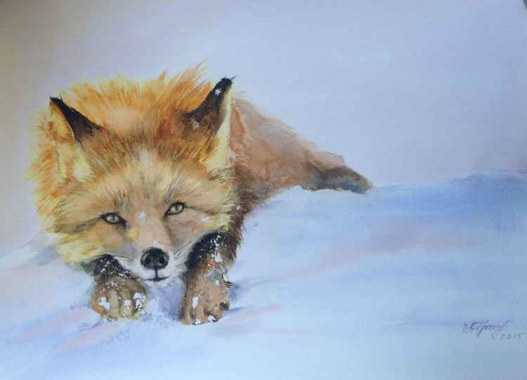 Little snowy fox -