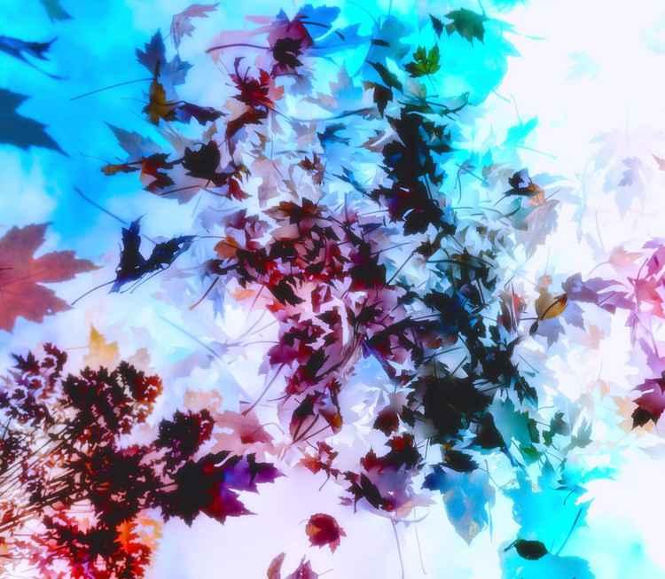 Falling Autumn Leaves -