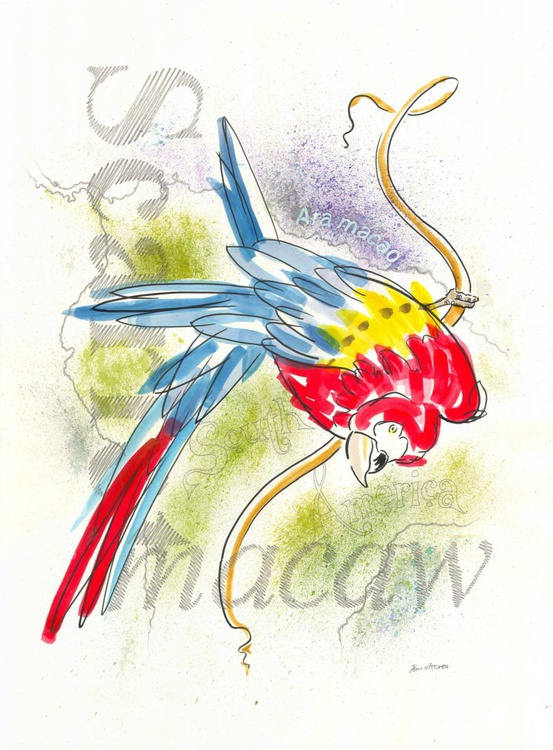 Scarlet Macaw - Image 0