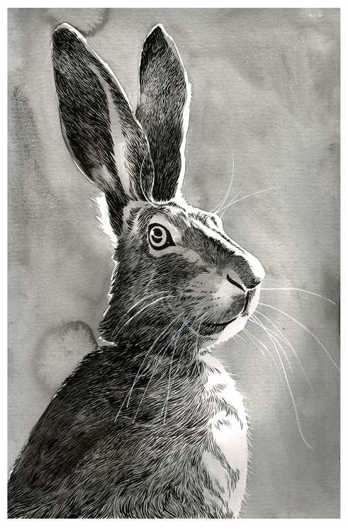 Portrait of a Hare -