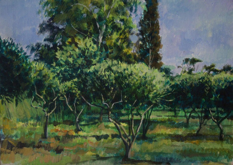 The Olive Grove - Image 0