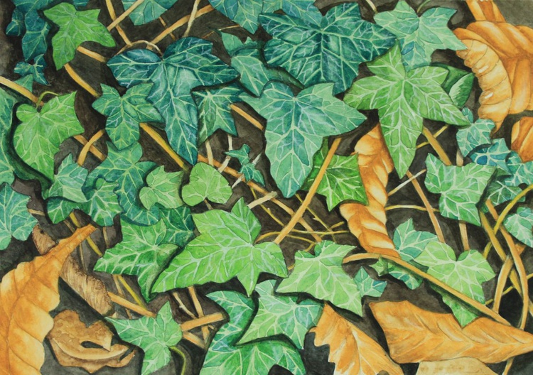 On the forest floor - Image 0