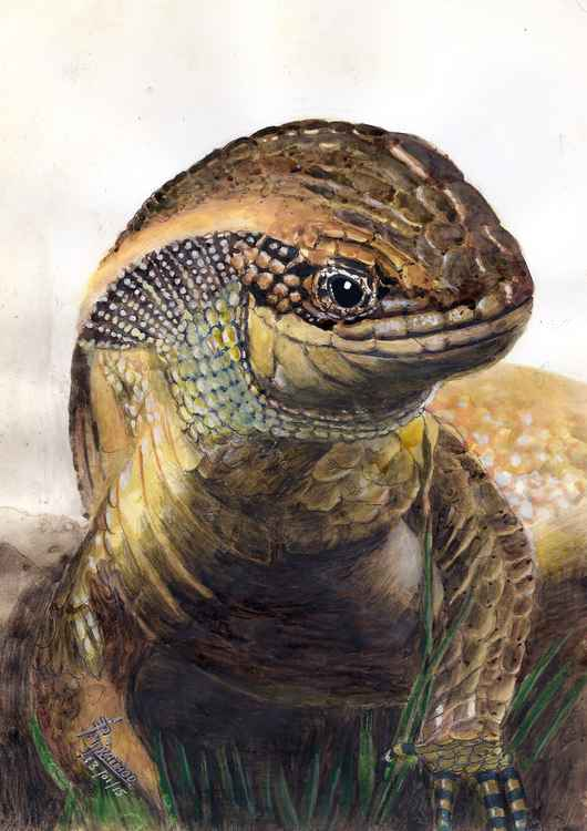 THE FEMALE COMMON LIZARD -