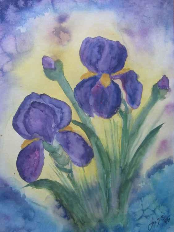 Iris -