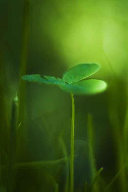 Green Lucky -