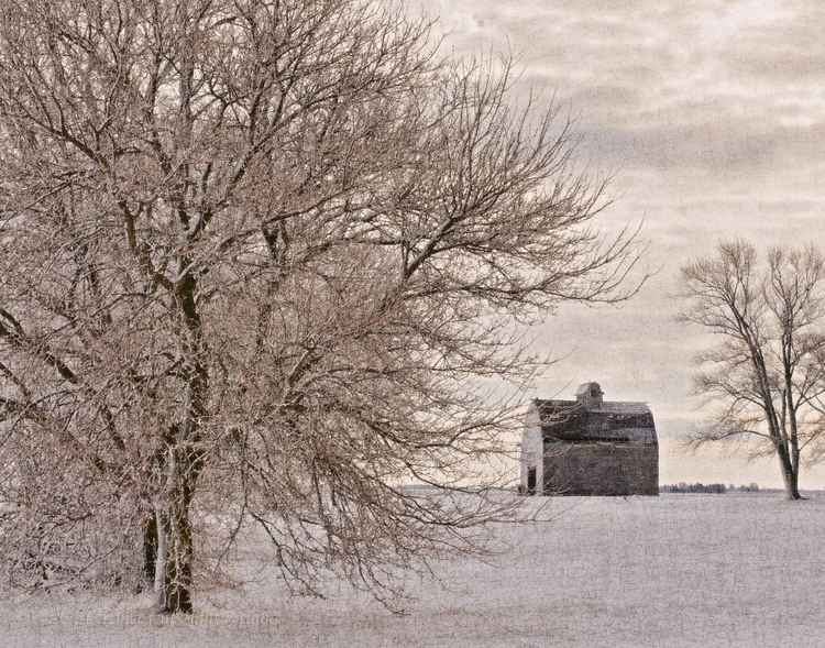 Winter at the edge of a country field