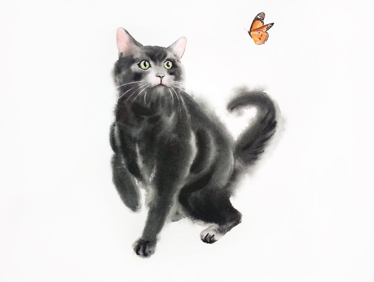 Black Cat Playing with Butterfly - Image 0