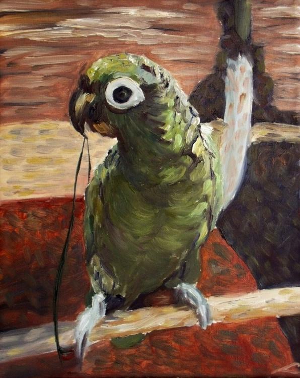Parrot - Image 0