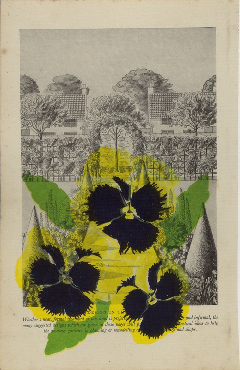Yellow Garden Pansy - Image 0