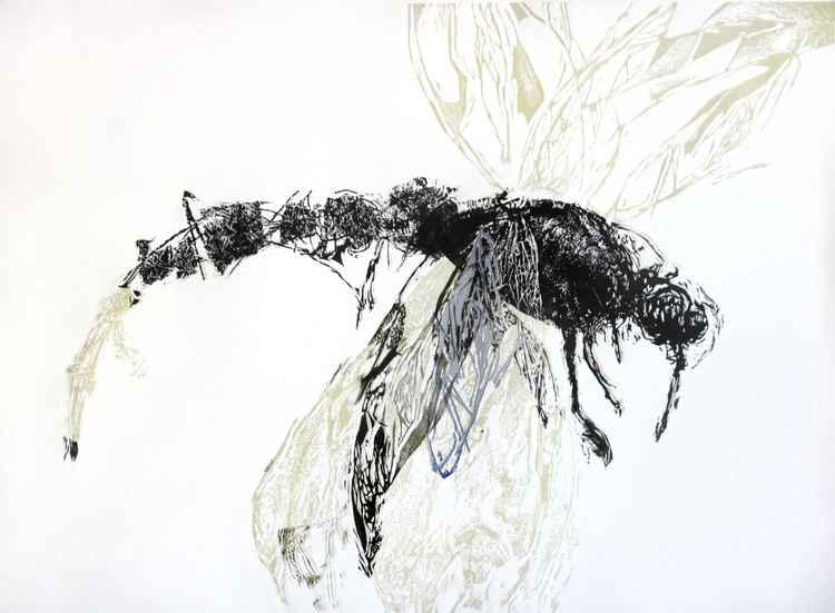 dragonfly 1b -