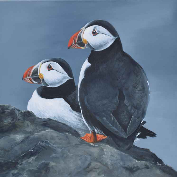 'Two Puffins on a rock' -