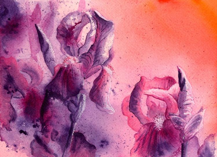 Iris, Pink and Purple - Image 0