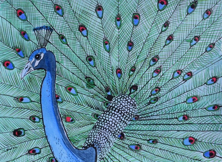 Peacock Showing Off - Image 0