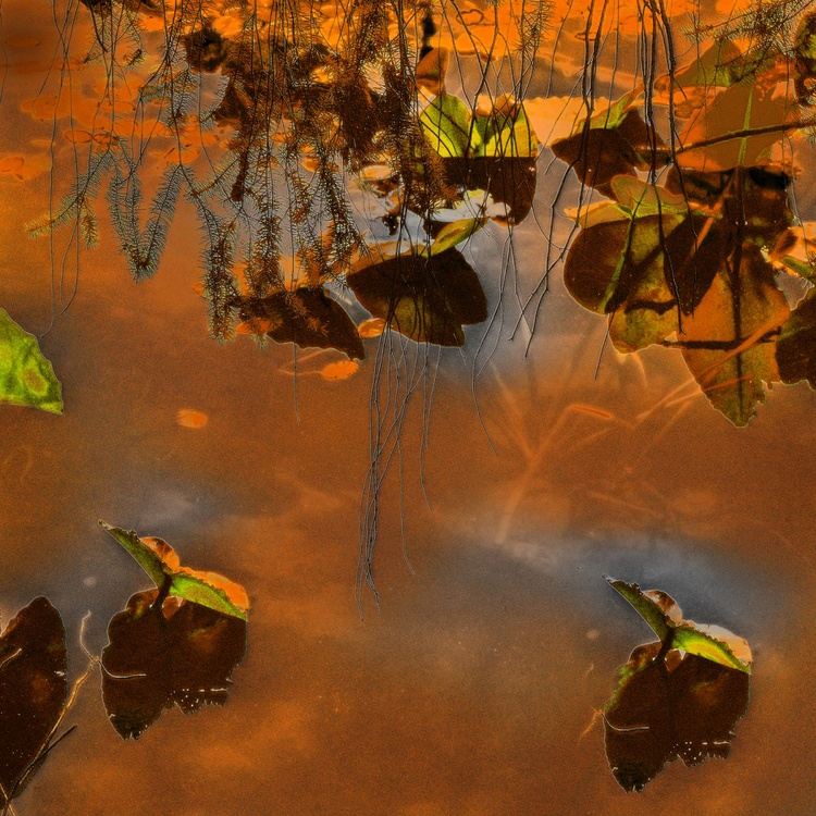 Golden Pond - Monoprint - Image 0