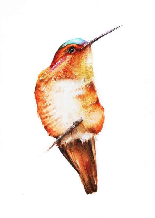 Hummingbird in orange