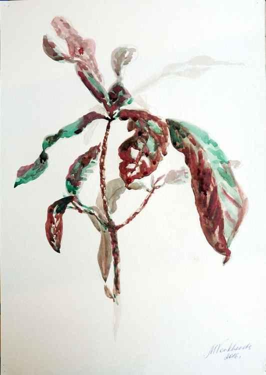 Croton. -