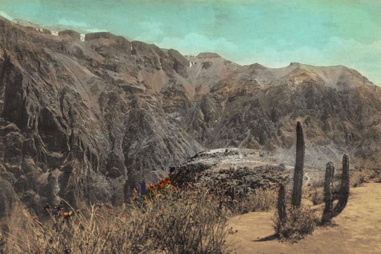 Colca Canyon flowers - Image 0