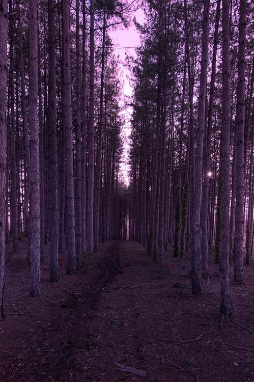 Through Nature - Image 0