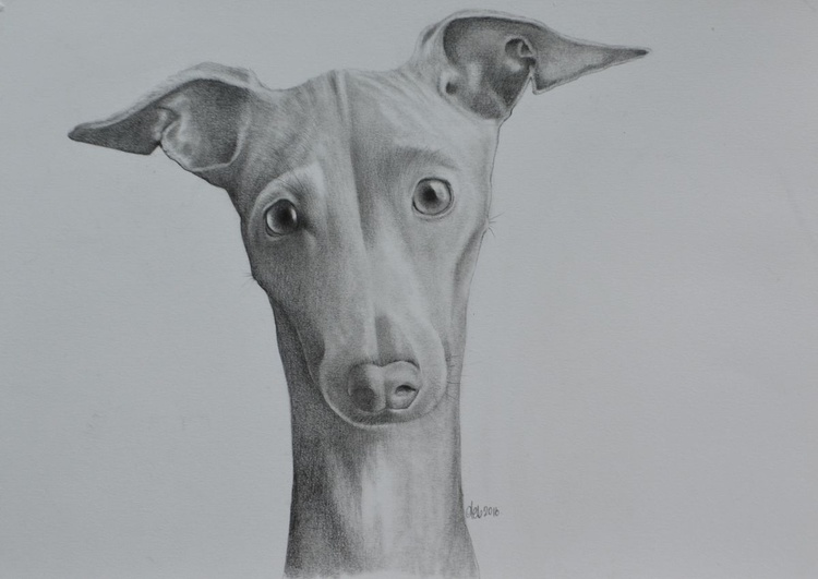 Whippet - Image 0