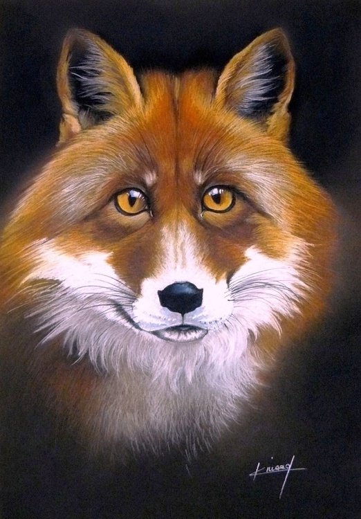 Red fox - Image 0
