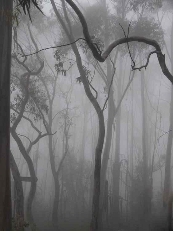 Misty bush scene