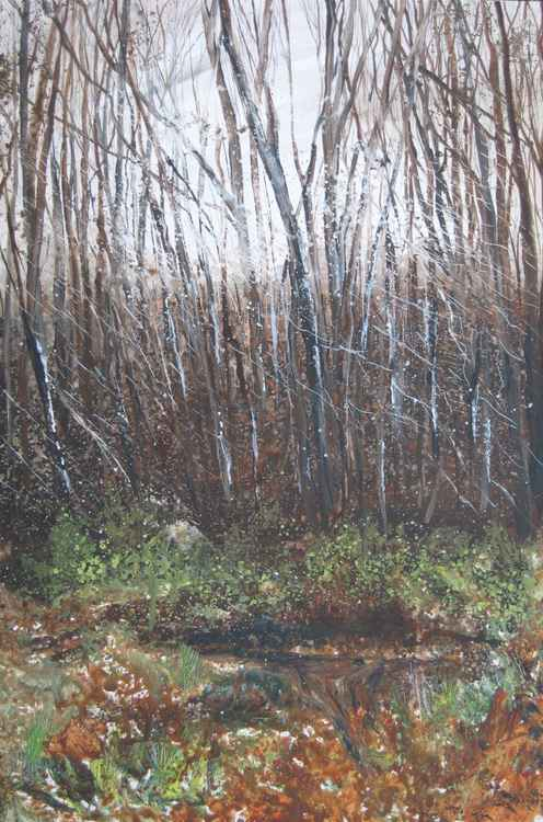 Brede woods winter -