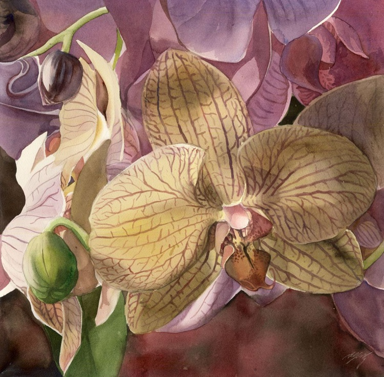 Orchid in pink - Image 0