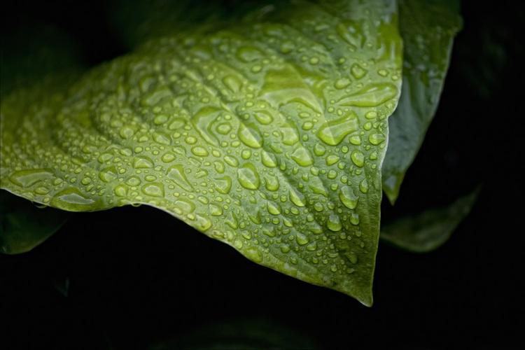 Wet Leaf - Image 0