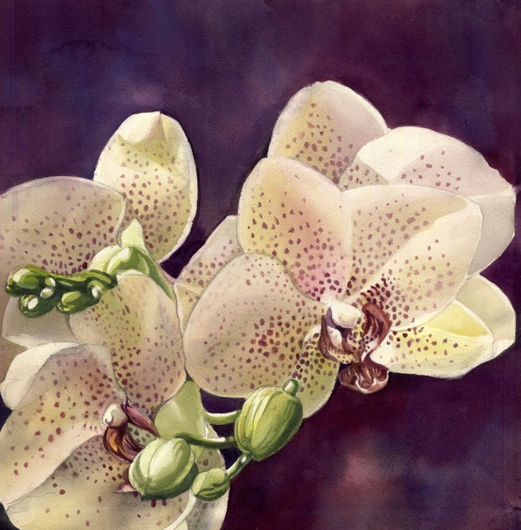 orchid in bloom - Image 0