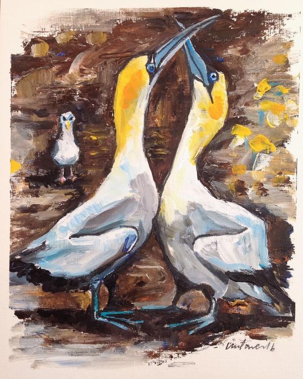Awkward Hug, gannets in love - Daily Bird #71 - Image 0