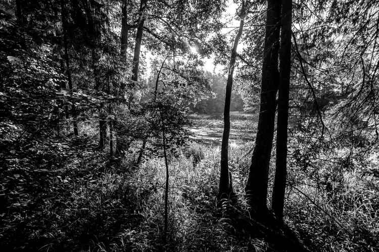 Landscape15 -