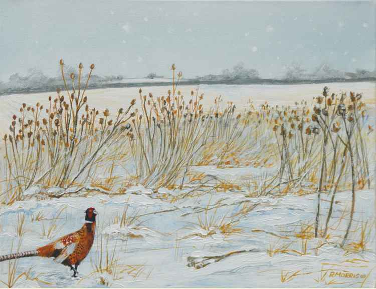 Pheasant in winter -