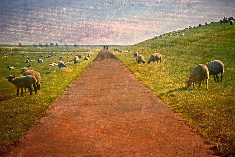 Guarded by Sheep - Image 0