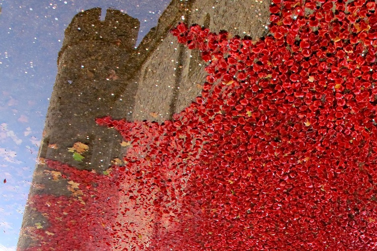 """POPPY MOAT 2014 (LIMITED EDITION 1/200) 12"""" X 8"""" - Image 0"""